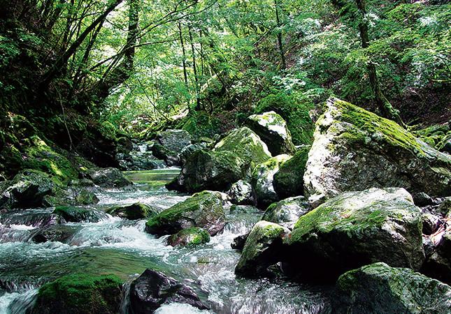 吉野川源流-水源地の森