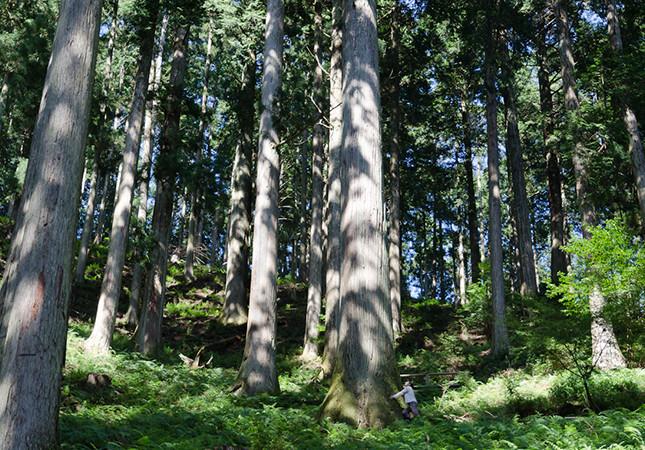 下多古村有林