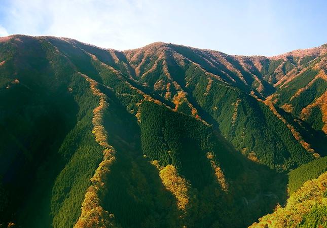 吉野の天然林と人工林